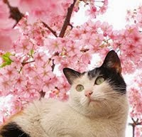 Fina kattbilder