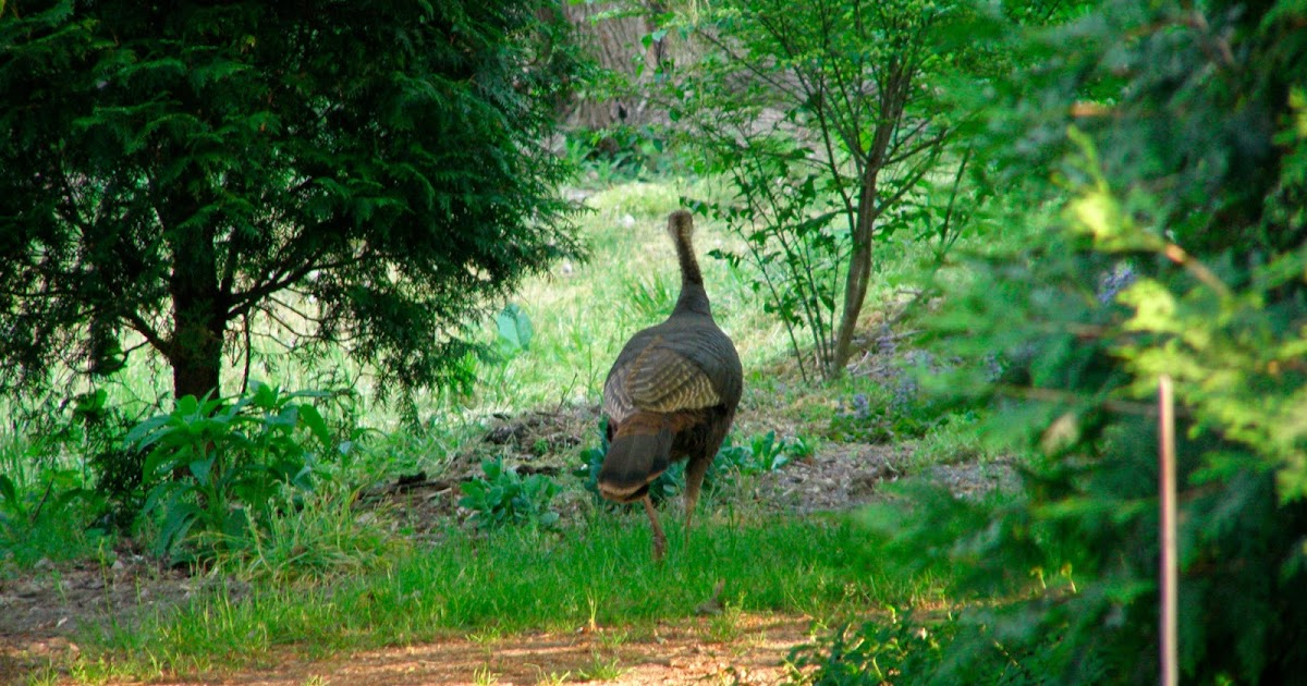 The freehold how to cook a wild turkey for 3 8 kg turkey cooking time