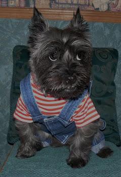 Puppy Jack