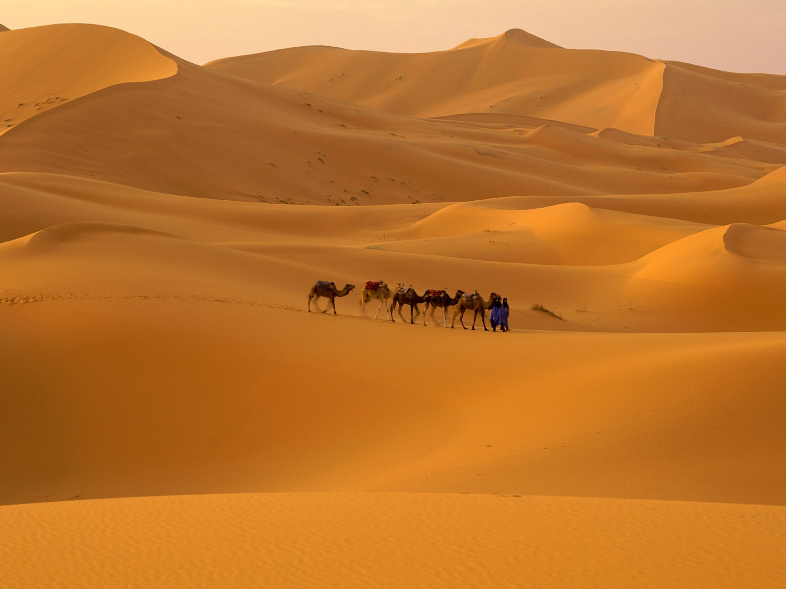 Sahara Desert World Largest Desert In Africa Luxury Places - What is the largest desert in the world