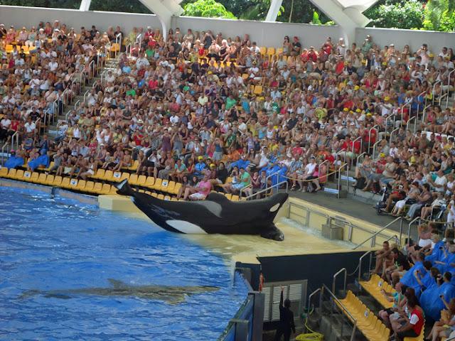 Blackfish Killer Whales doing unnatural things