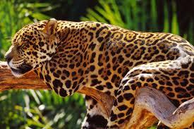 Animals found in amazon river forest