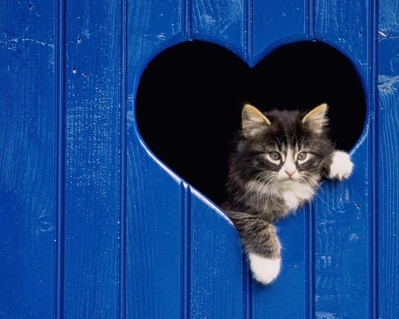 http://2.bp.blogspot.com/-kHFtbkFYb_8/TdlgDT1raKI/AAAAAAAAAGY/SSRkKyzEVG4/s1600/cat_blue_heart_1280x1024.jpg