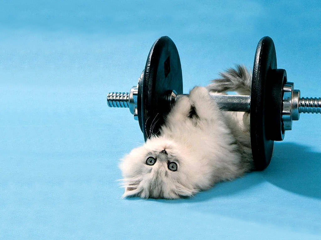 http://2.bp.blogspot.com/-kHSIgOmFKt0/TgxheK4ZGwI/AAAAAAAAAic/94V_evG8HJ4/s1600/Funny_Kitten_Lifting_Weights.jpg#FUNNIES%20OLD%20LADIES%20LIFT%20WEIGHTS%20%201024x768