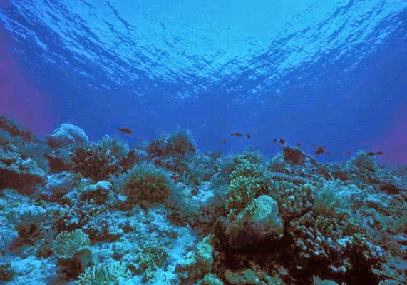 definisi Dataran Laut Sangat dalam