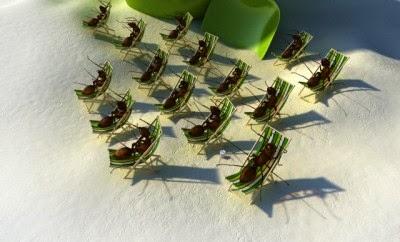 Wie vertreibt man Ameisen