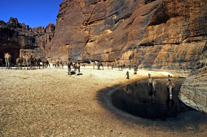 The Guelta d'Archei is probably the most famous guelta in the Sahara