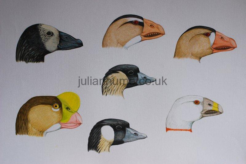 What a dodo bird looks like 10