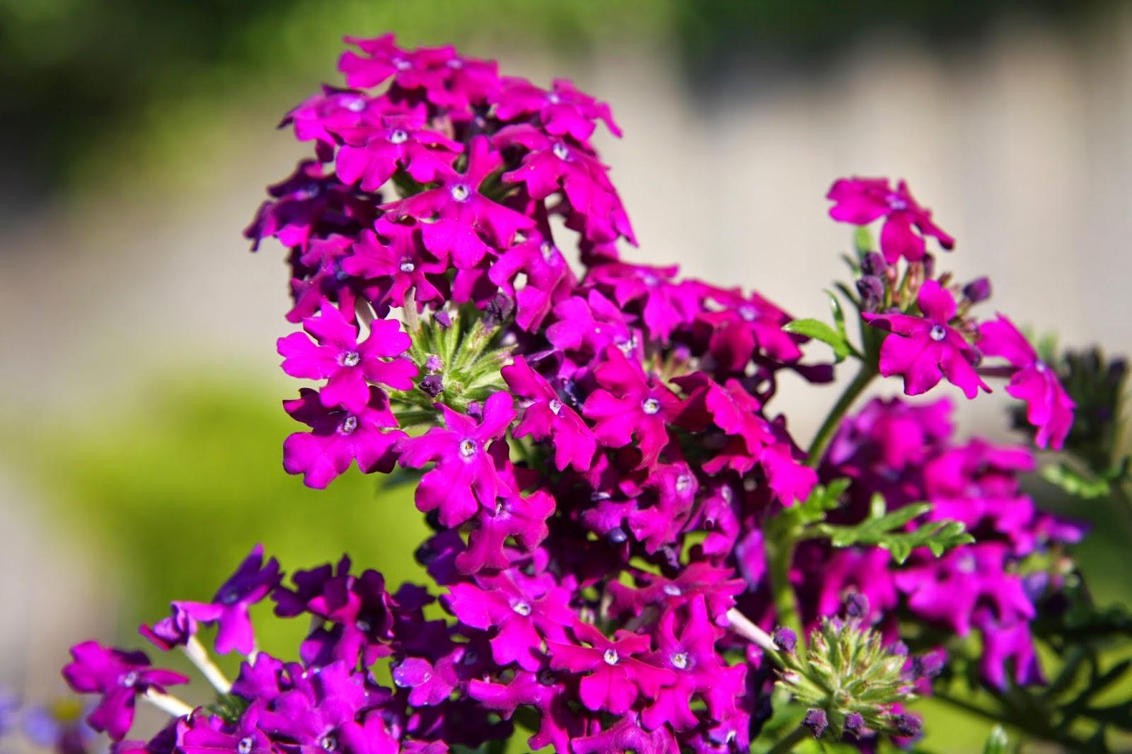 Aprende a cuidar de tu jard n 5 flores resistentes al sol - Plantas que aguanten el sol ...