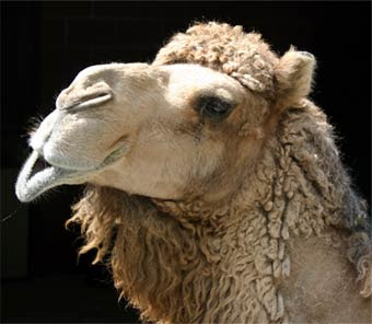 Living In The F O G The Camels Are Coming Genesis 24 63
