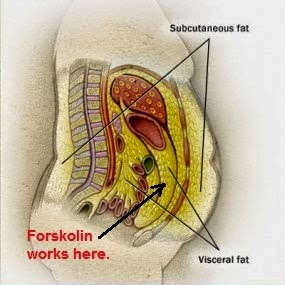 What is Visceral Fat Loss