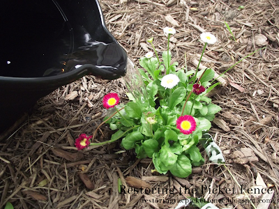 When you run your bath, take the cold water (that you normally let run down the drain) and gather it in a bucket and feed your plants! - Restoring the Picket Fence