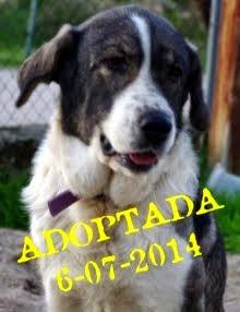 Tina adoptada