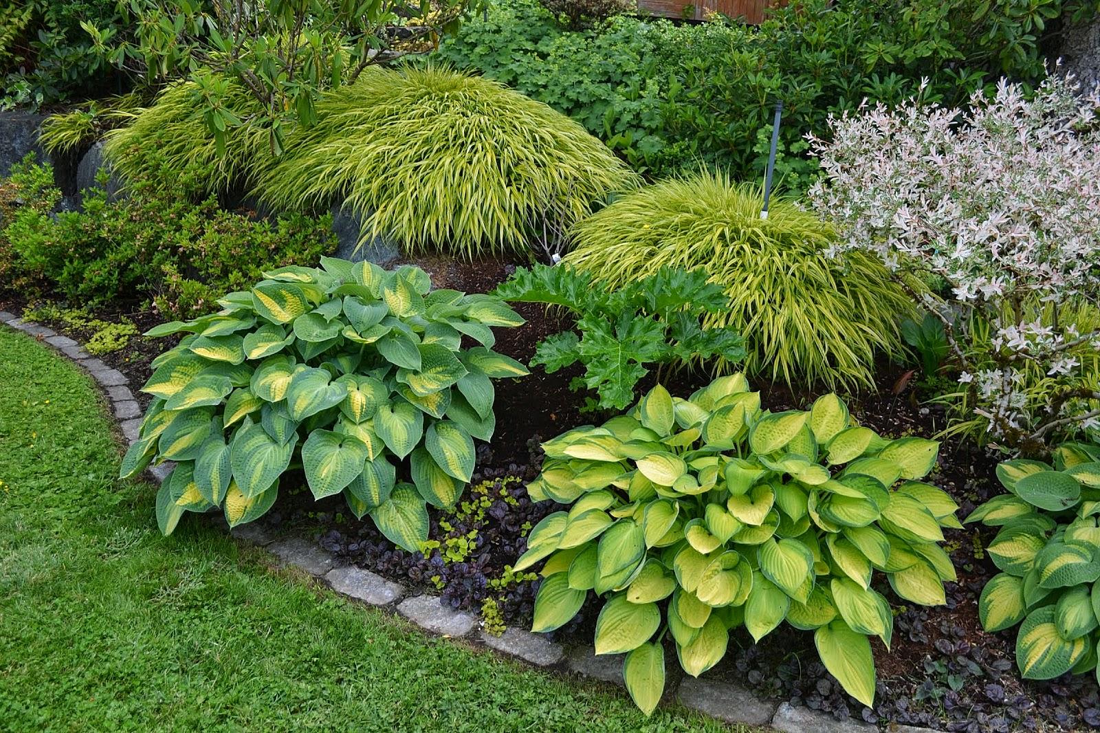 The Outlaw Gardener Garden Of Peggy And Bill Fox