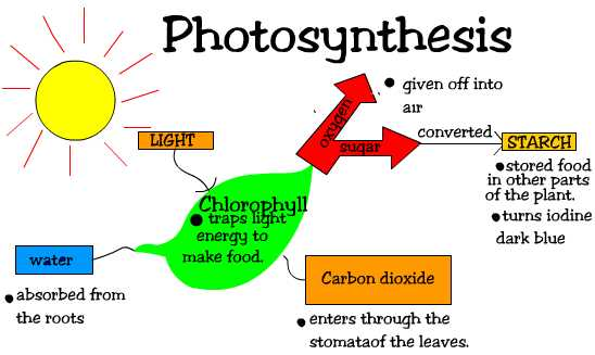 where photosythesis occurs
