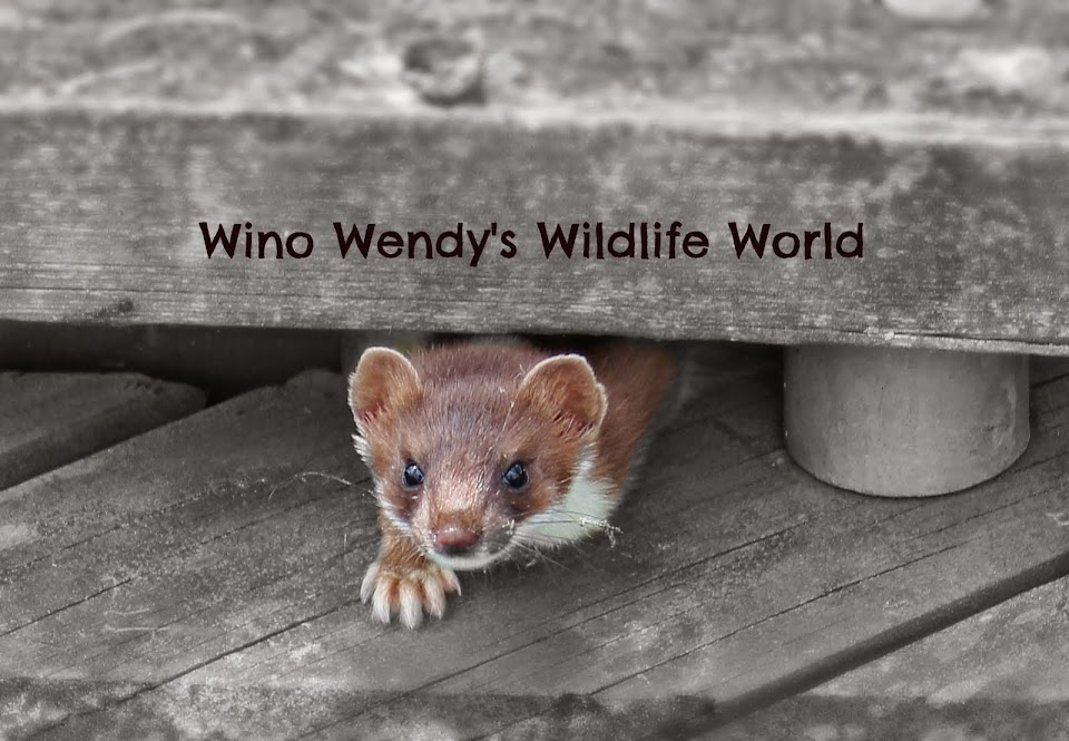 Wino Wendys Wildlife World