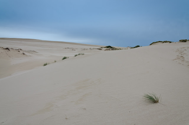 sand dunes near swan lake camp