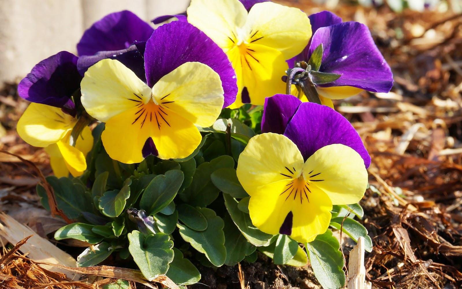 Afbeeldingsresultaat voor lentebloemen