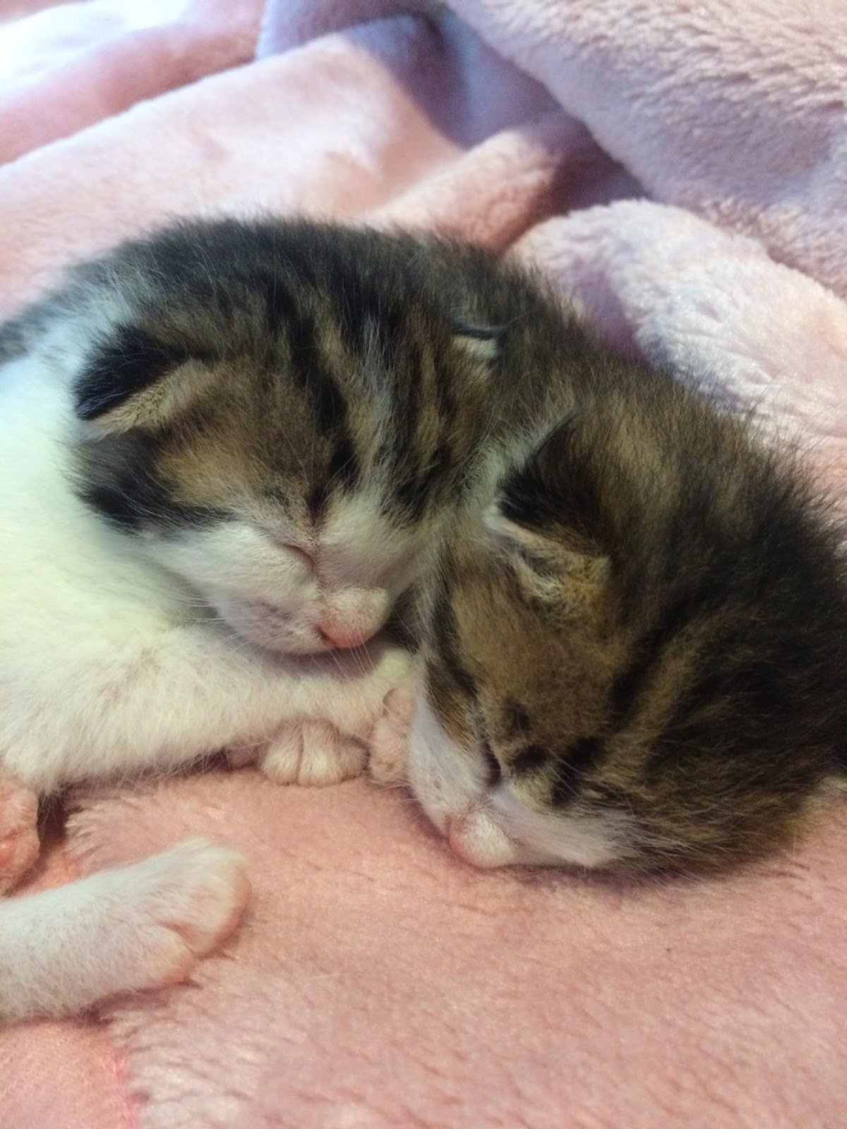Dream Interpretation - kittens are dreaming, then you can not be intimidated by intrigues