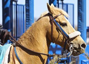 Lead Pony