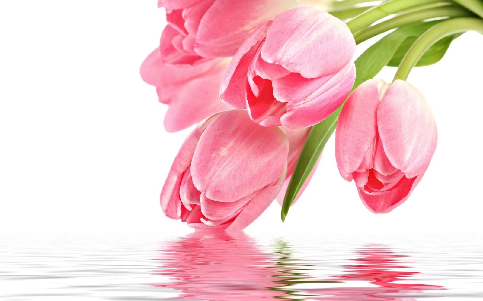imagenes de flores tulipanes: