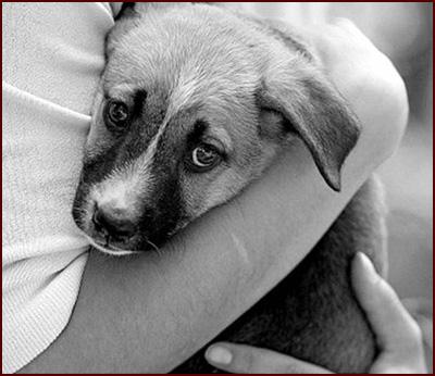 COLABORACION CON PROTECTORA DE ANIMALES