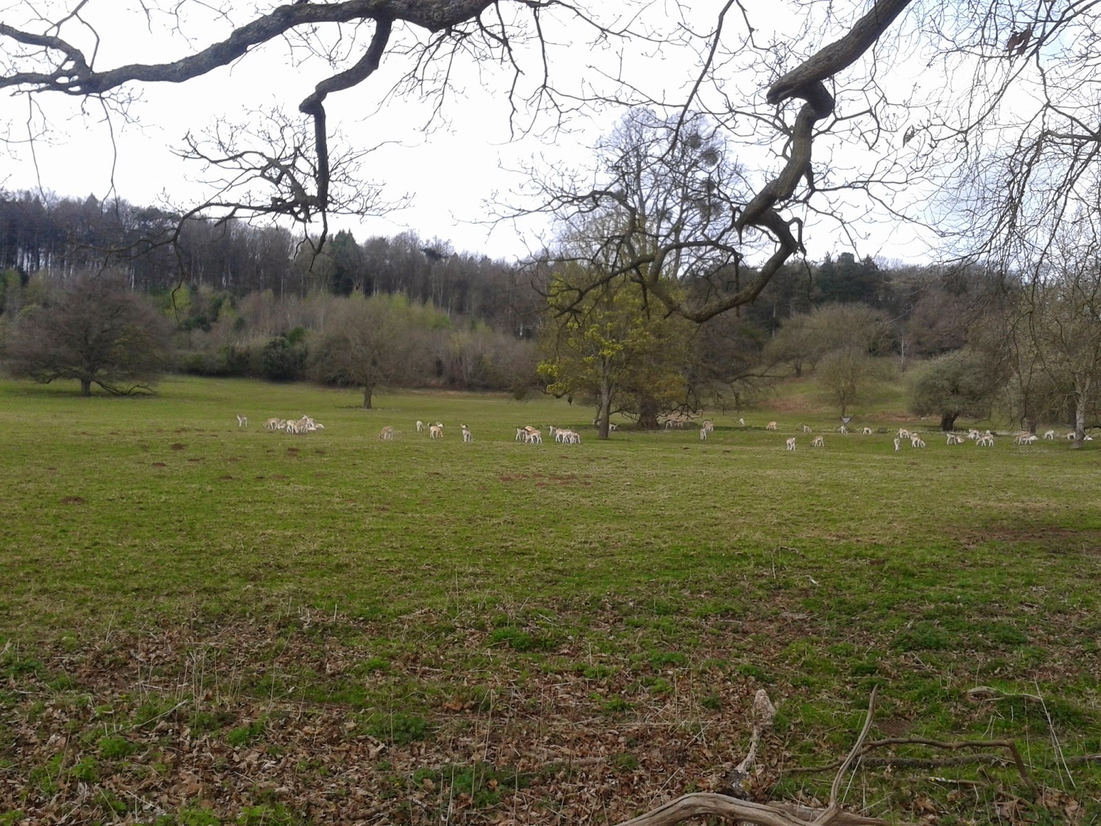 Deer park at Ashton Court, Bristol