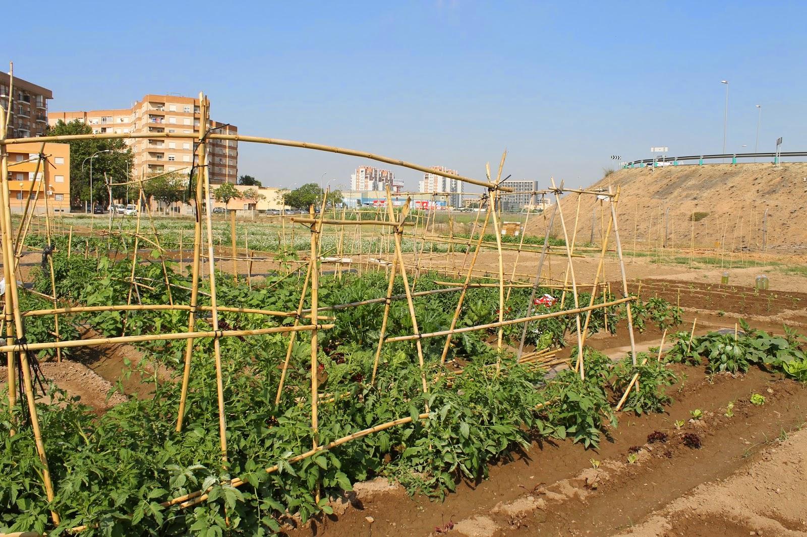 Urban Cultive