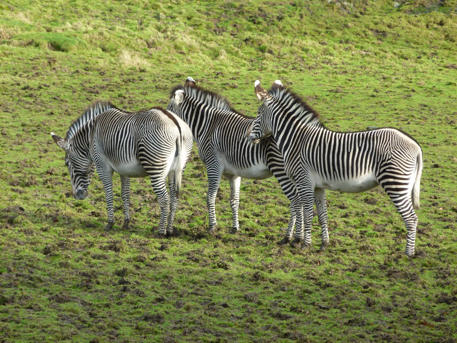 visiting edinburgh zoo scotland