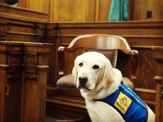 Organização americana treina cães para dar suporte emocional às vítimas de crimes violentos, principalmente crianças (Foto: Reprodução/Facebook/Courthouse Dogs Foundation)