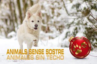 VISITA NUESTRA WEB PROTECTORA ANIMALS SENSE SOSTRE