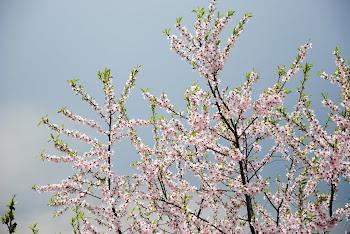 Ritornerà la bella stagione