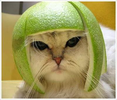 immagine molto divertente di un gatto