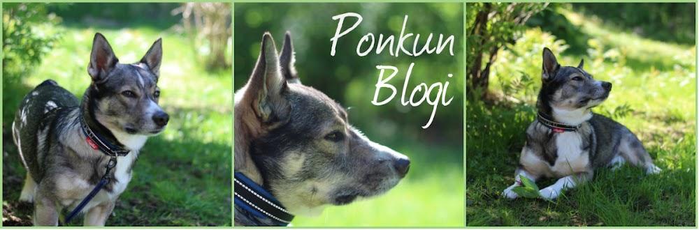 Ponkun Blogi