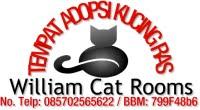 Tempat Adopsi Kucing Ras