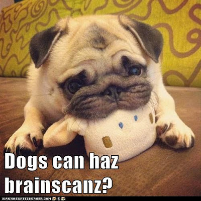 Dogs can haz brainscanz?