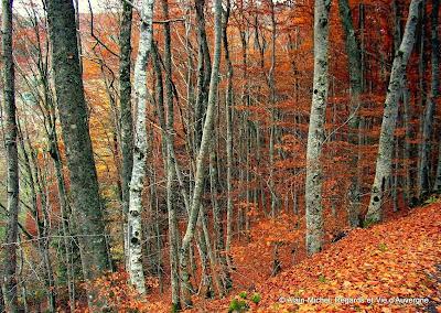 automne, bois, forêt