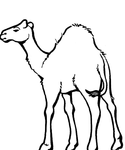 Printable Camel Coloring Pages