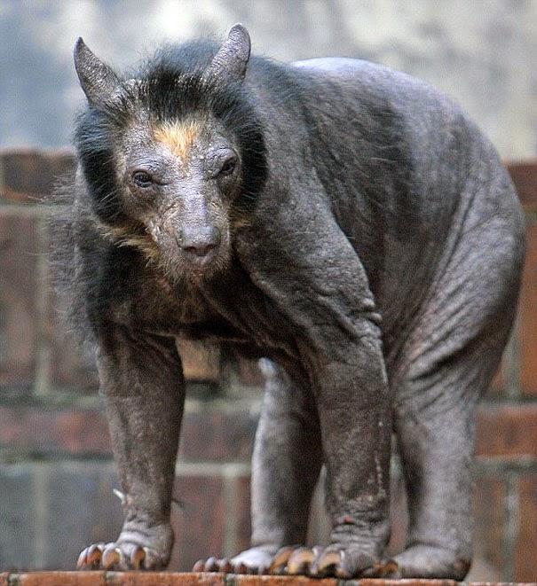 animales con caida de cabello