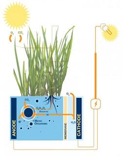 listrk tenaga tumbuhan,energi alternatif,sumber listrik dari tumbuhan,listrik alternatif