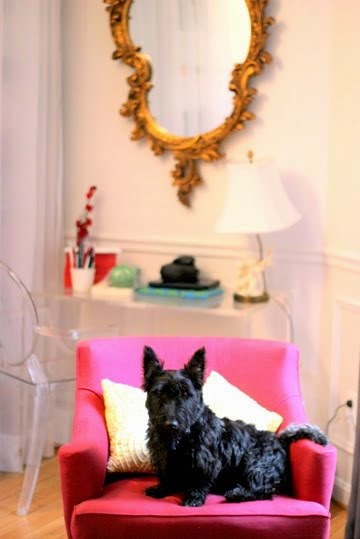 Scottie dog on pink chair