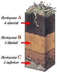 Qu es el suelo y sus fen menos erosivos for El suelo y sus capas