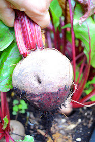 How beets are good for your health