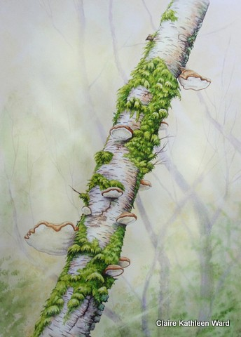 how to draw a birch tree forbkids