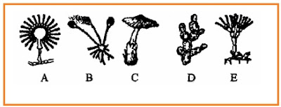 BIOLOGI GONZAGA: PRE TEST JAMUR