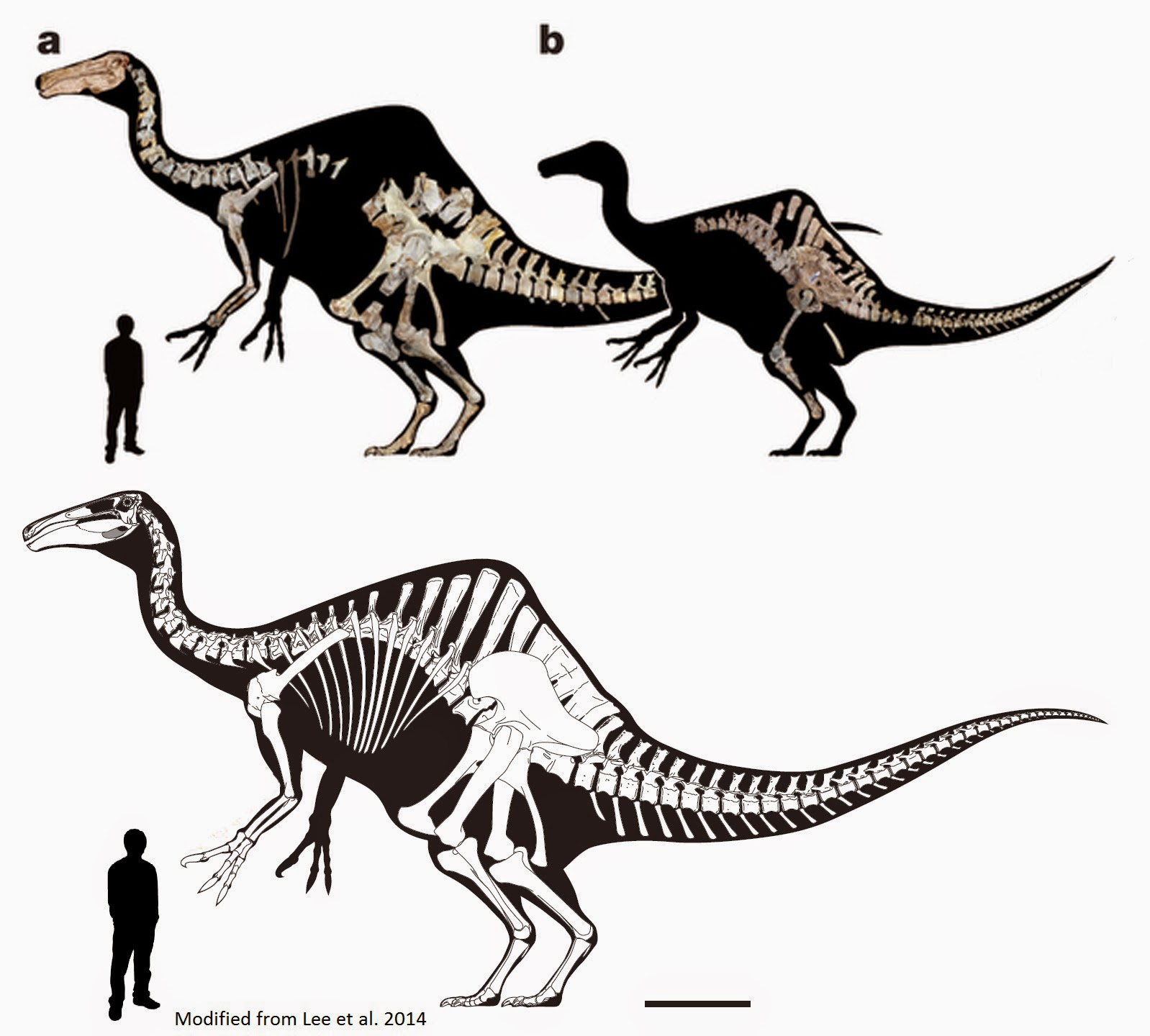Supplementary Information for Holtz s Dinosaurs