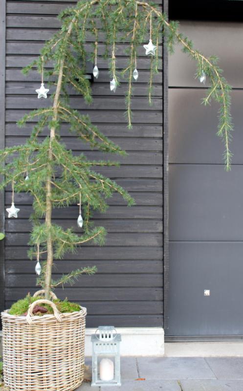 cedertræ krukke