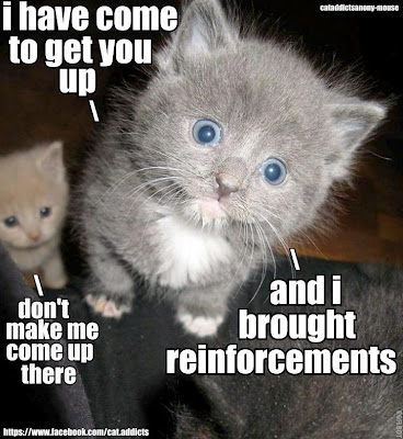 Tiny kitty says, i have come to get you up and i brought reinforcements. Don't make me come up there.