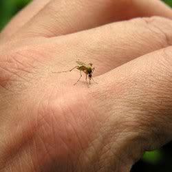 Ciri Orang yang Mudah Digigit Nyamuk