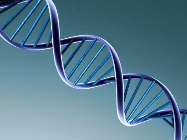 Oldest DNA Ever Found